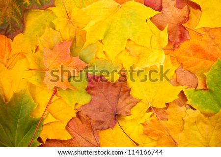 Beautiful yellow autumn leaves background - stock photo
