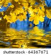 Beautiful yellow autumn maple leaves. Autumn concept. - stock photo