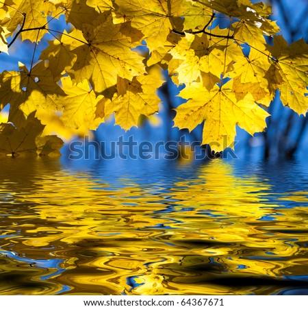 Beautiful yellow autumn maple leaves. Autumn concept. - stock photo
