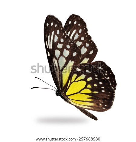 Beautiful yellow butterfly isolated on white background. - stock photo