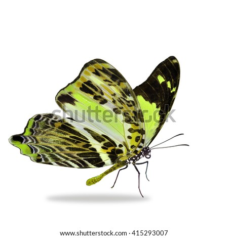 Beautiful yellow butterfly isolated on white background