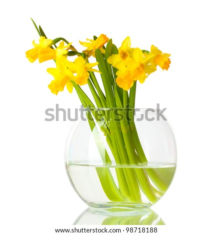 beautiful yellow daffodils in transparent vase isolated on white - stock photo