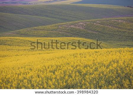 Beautiful yellow field countryside landscape - stock photo
