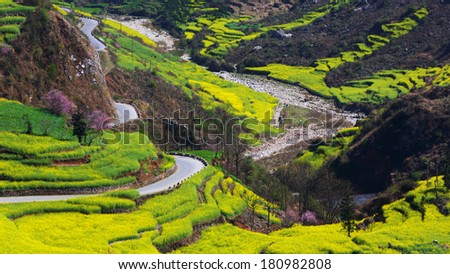 Beautiful yellow field full of rapeseed with curved rural road in Luoping at Yunnan of China - stock photo