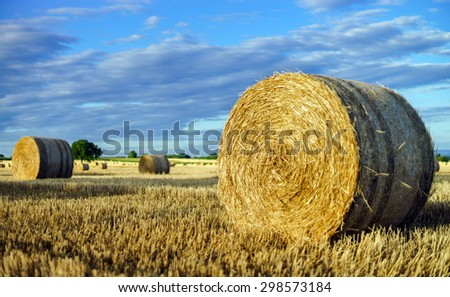 Beautiful yellow field with haystacks at sunset, Alsace, France - stock photo
