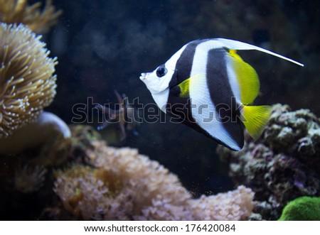Beautiful yellow fish swimming in the sea - stock photo