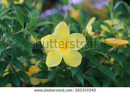 BEAUTIFUL YELLOW FLOWER - stock photo