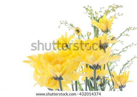 Beautiful yellow flower aster, daisy isolated on white background.
