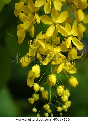 Beautiful Yellow Flower Golden Shower On Tree