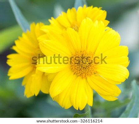 beautiful yellow flower in nature
