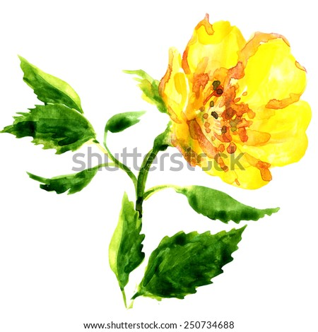 beautiful yellow flower isolated on white background - stock photo