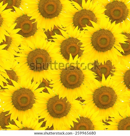 Beautiful yellow flower, sunflower pattern, nature abstract background