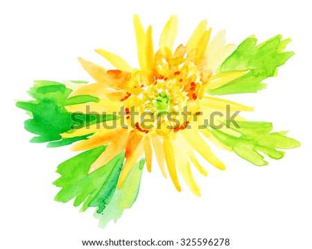 Beautiful Yellow flower, Watercolor painting.  - stock photo