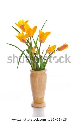 beautiful yellow flowering crocus on a white background