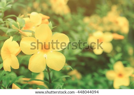 Beautiful yellow flowers bloom on green natural background. Vintage tone - stock photo