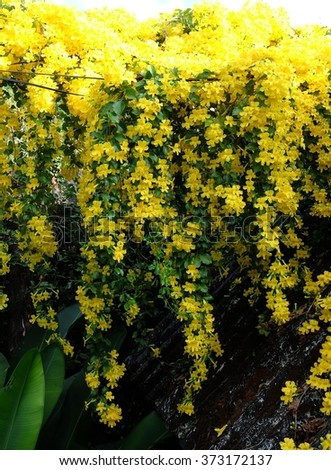 Beautiful yellow flowers blooming in spring