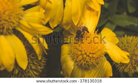 Beautiful yellow flowers growing, selective focus