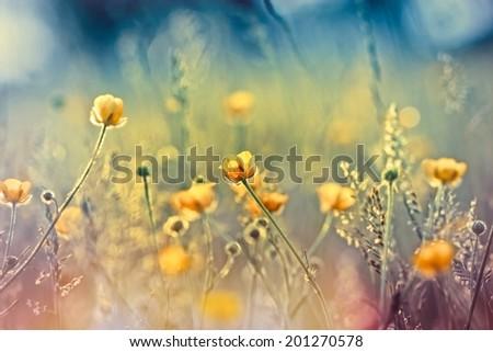 Beautiful yellow flowers in meadow - stock photo