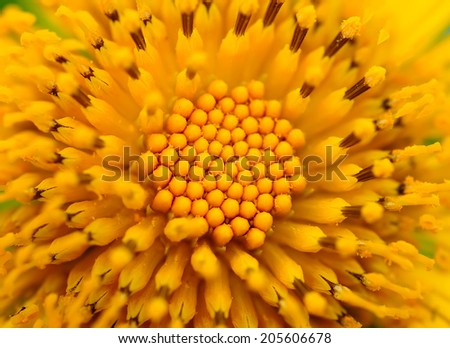 Beautiful Yellow flowers, may use as background