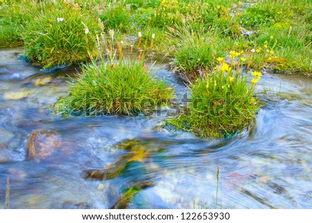 Beautiful yellow Flowers on the bank of a rapid stream