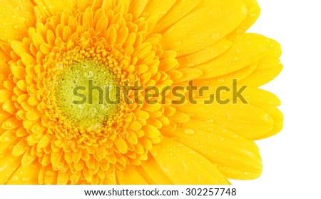 beautiful yellow gerbera flower, isolated on white