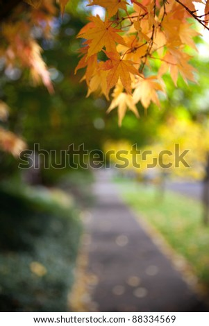 Beautiful yellow leaves framing an urban sidewalk