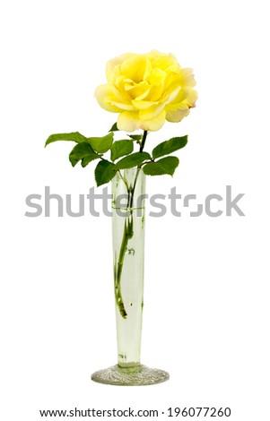 Beautiful Yellow Rose Glass Rose Vase Stock Photo Royalty Free