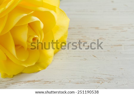 Beautiful yellow rose on a white shabby table - stock photo