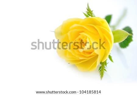 Beautiful yellow roses background - stock photo