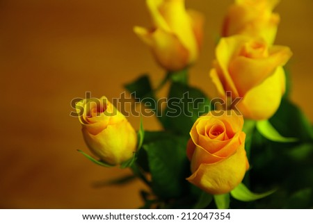 beautiful yellow roses surrounded by green leaves