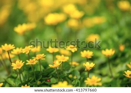 beautiful yellow spring flowers background - stock photo