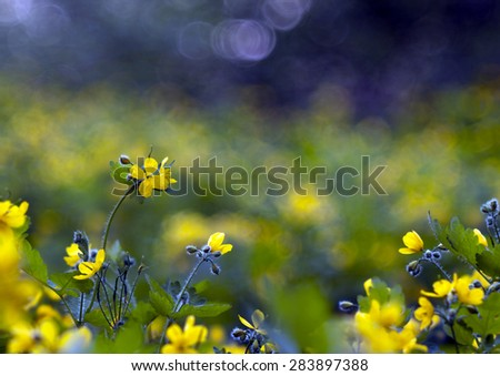Beautiful yellow Spring flowers in the forest - stock photo