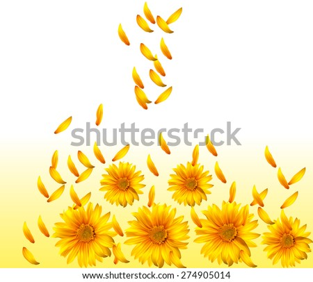 Beautiful yellow sunflower background with petals close up - stock photo
