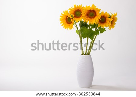 Beautiful yellow sunflowers in a vase on a white background. - stock photo