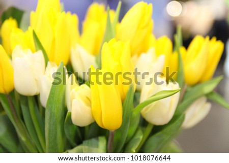 Beautiful yellow Tulips Bouquet. Spring