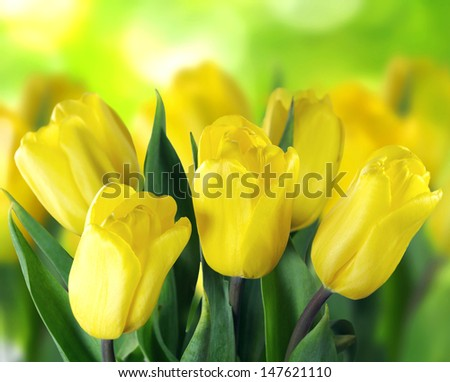 Beautiful yellow tulips on green bokeh background