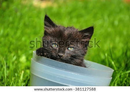 Beautiful young black and brown cat inside bucket. Small cute kitten playing in a flower pot - stock photo