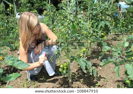 beautiful young blond girl, grows tomatoes, organic farm