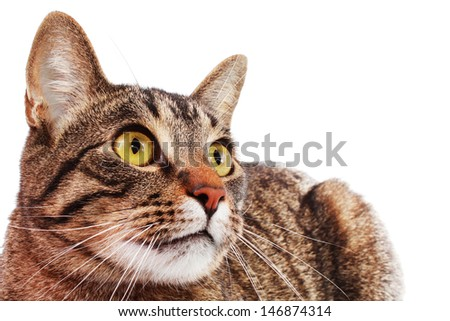 Beautiful young cat - stock photo