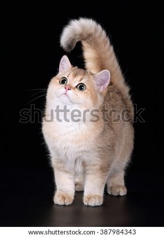 Beautiful young cat on black background