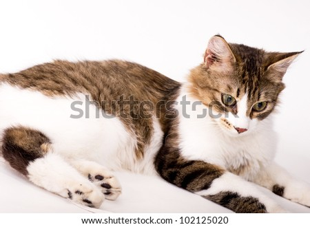 Beautiful young cat on white background