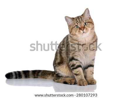 Beautiful young cat sitting on a white background