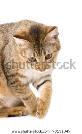 Beautiful young cat with toy on white background