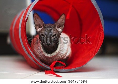 Beautiful young don sphynx kitten had just woke up, lying in bed and yawns, rest, sleep, relax, naked cat - stock photo