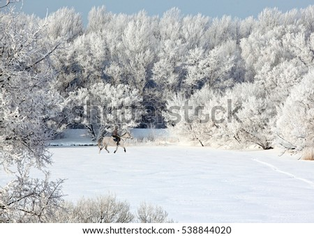 Beautiful young equestrian woman in winter fields