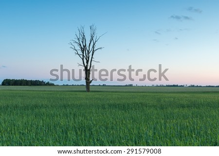 Beautiful young green field at late springtime photographed after sunset. Polish calm countryside - stock photo