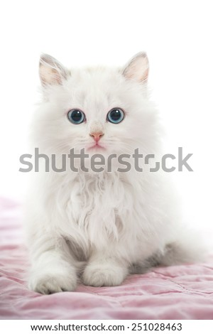 Beautiful Young White Cat with Blue Eyes on Pink Blanket