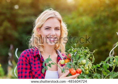 Beautiful young woman in checked red shirt harvesting tomatoes