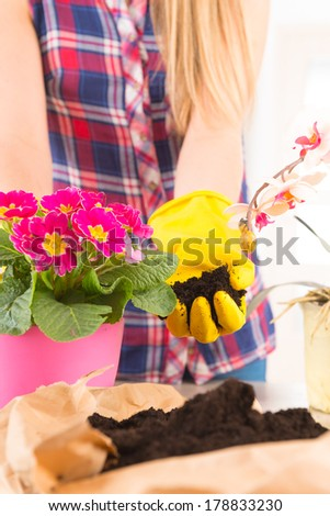 Beautiful young woman planting colorfull flower in a flowerpot at her home - stock photo