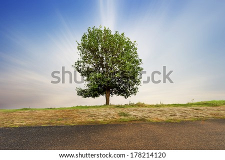 Beautifull green tree in the field - stock photo